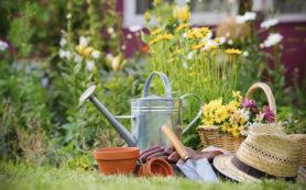 7 Tricks to Obtain a Neat Backyard