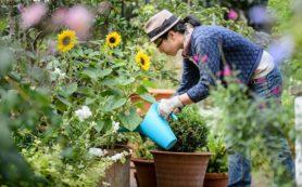 Zero Flip Garden Mowers – Clear up Your Garden With Enjoyable